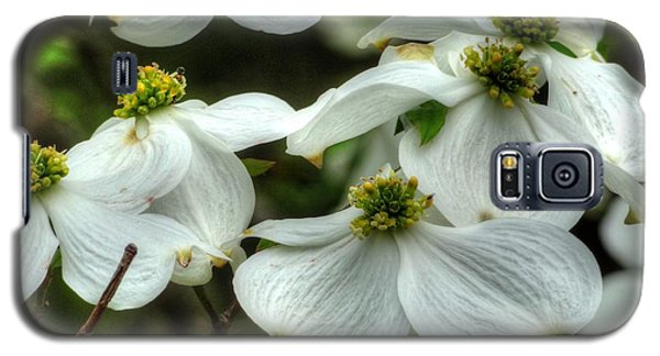 Galaxy S5 Case featuring the photograph Mississippi Dogwood II by Lanita Williams