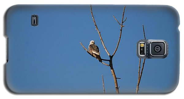 Galaxy S5 Case featuring the photograph Mississippi Kite by Mark McReynolds