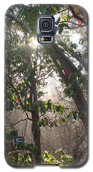 Galaxy S5 Case featuring the photograph Mist Y Madrona by Brooks Garten Hauschild