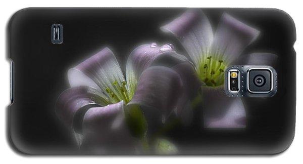Misty Shamrock 2 Galaxy S5 Case by Susan Capuano