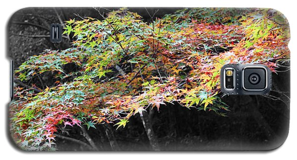 Galaxy S5 Case featuring the photograph Miyajima Maple by Cassandra Buckley