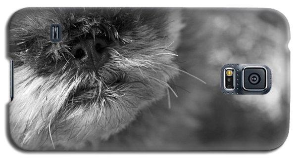 Griffon Galaxy S5 Case - Moby by Matthew Blum