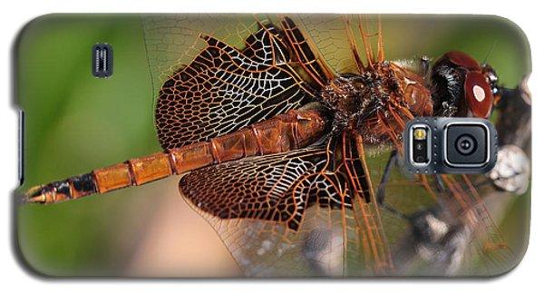 Mocha And Cream Dragonfly Profile Galaxy S5 Case by Kenny Glotfelty