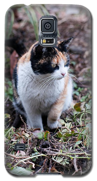 Galaxy S5 Case featuring the photograph Mochi In The Garden by Laura Melis