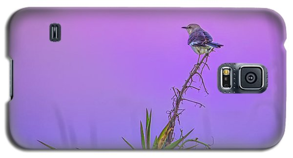 Galaxy S5 Case featuring the photograph Mocking The Yucca by Rob Sellers