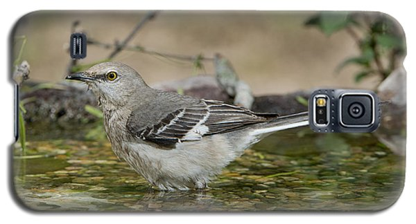 Mockingbird Galaxy S5 Case by Anthony Mercieca
