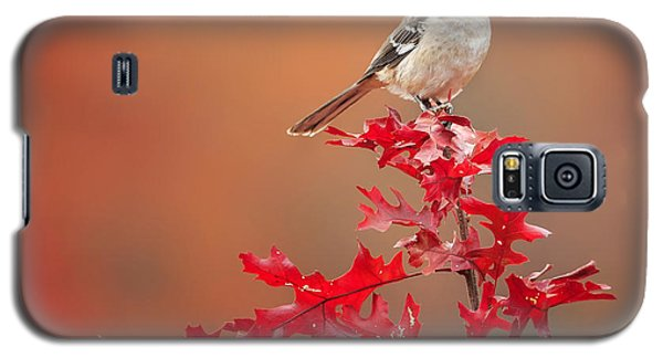 Mockingbird Galaxy S5 Case - Mockingbird Autumn Square by Bill Wakeley