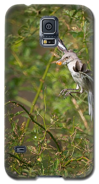 Mockingbird Galaxy S5 Case by Bill Wakeley