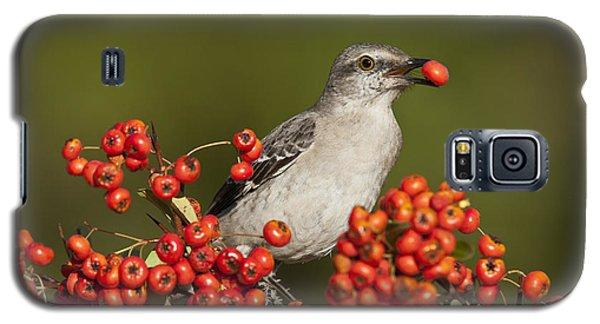 Mockingbird In Berries Galaxy S5 Case