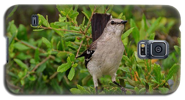 Mockingbird In Tree Galaxy S5 Case
