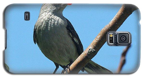 Mockingbird With Berries Galaxy S5 Case