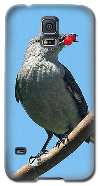 Mockingbird With Berries Galaxy S5 Case
