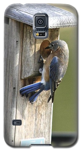 Galaxy S5 Case featuring the photograph Mom Bluebird Investigates by Jeanne Kay Juhos