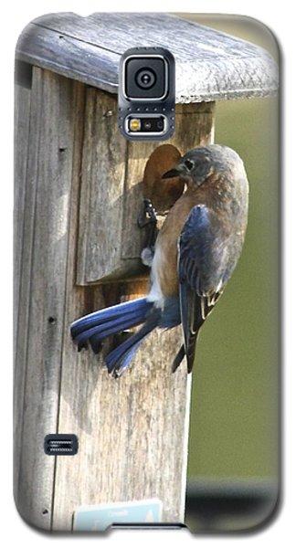 Mom Bluebird Investigates Galaxy S5 Case by Jeanne Kay Juhos