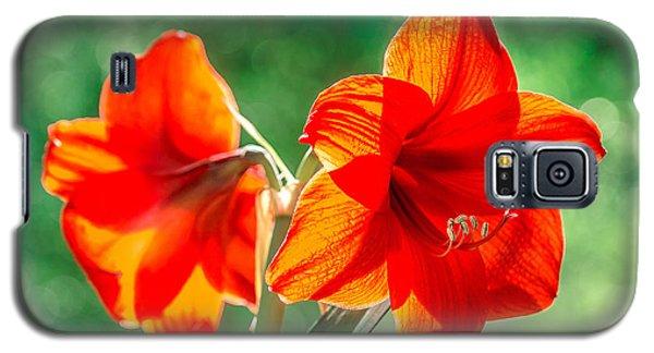 Moms Amaryllis Flower Galaxy S5 Case