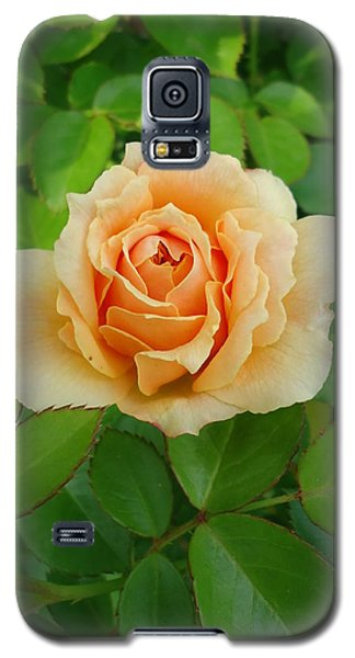 Galaxy S5 Case featuring the photograph Mom's Rose by Leslie Manley