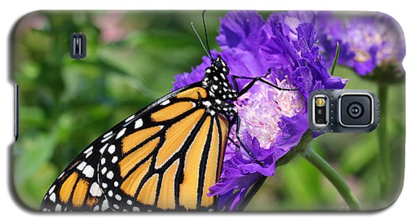 Monarch And Pincushion Flower Galaxy S5 Case by Steve Augustin