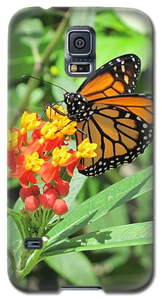 Monarch At Rest Galaxy S5 Case