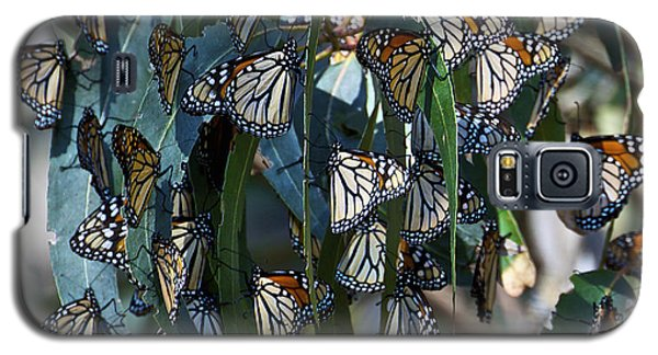 Monarch Butterflies Natural Bridges Galaxy S5 Case