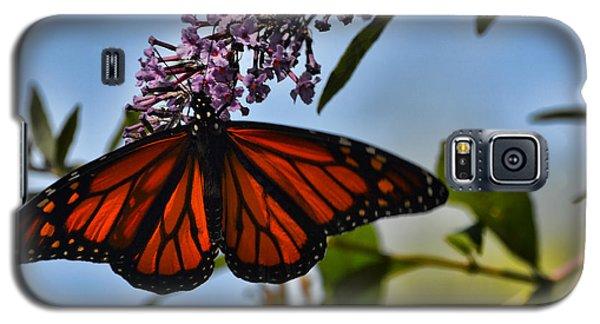 Monarch Butterfly #1 Galaxy S5 Case