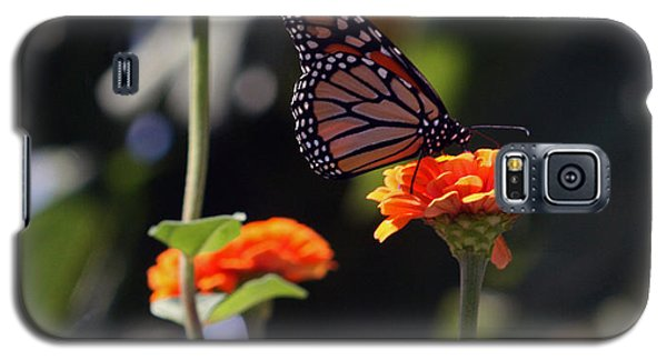 Monarch Butterfly And Orange Zinnias Galaxy S5 Case