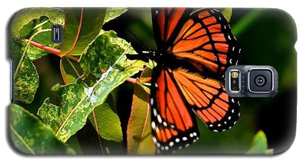 Viceroy Butterfly II Galaxy S5 Case
