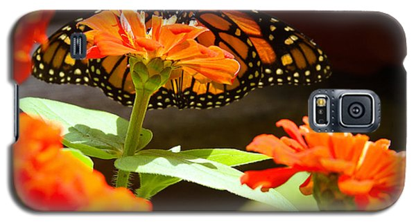 Galaxy S5 Case featuring the photograph Monarch Butterfly II by Patrice Zinck