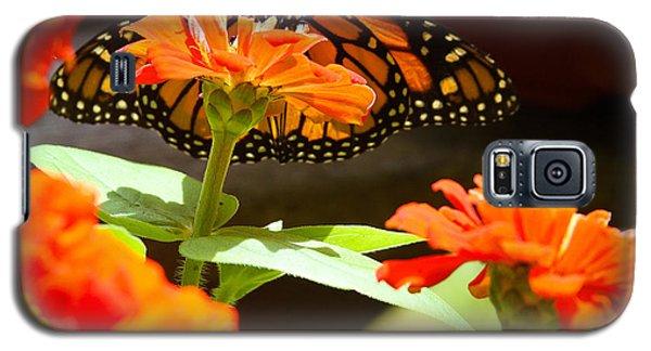 Monarch Butterfly II Galaxy S5 Case