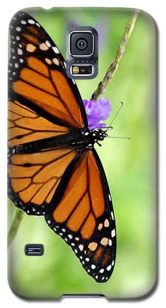 Monarch Butterfly In Spring Galaxy S5 Case