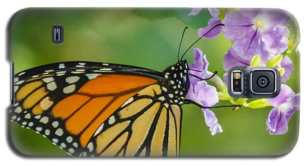 Monarch Butterfly Galaxy S5 Case by Jane Luxton