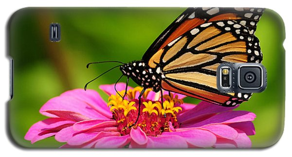 Galaxy S5 Case featuring the photograph Monarch Butterfly On Zinnia by Olivia Hardwicke