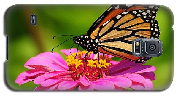 Monarch Butterfly On Zinnia Galaxy S5 Case