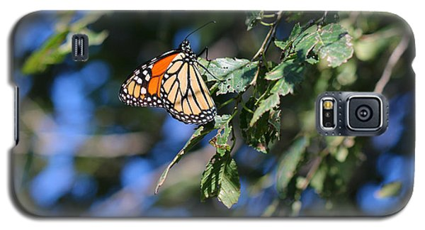 Galaxy S5 Case featuring the photograph Monarch Butterfly by Rebecca Davis