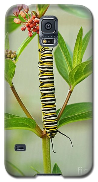 Monarch Caterpillar And Milkweed Galaxy S5 Case by Steve Augustin
