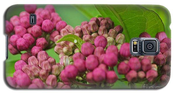 Monarch Egg Galaxy S5 Case by Steve Augustin