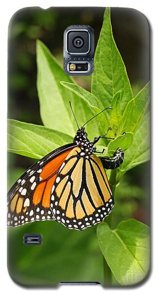 Monarch Egg Time Galaxy S5 Case by Steve Augustin