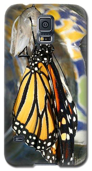 Monarch In A Jar Galaxy S5 Case by Steve Augustin