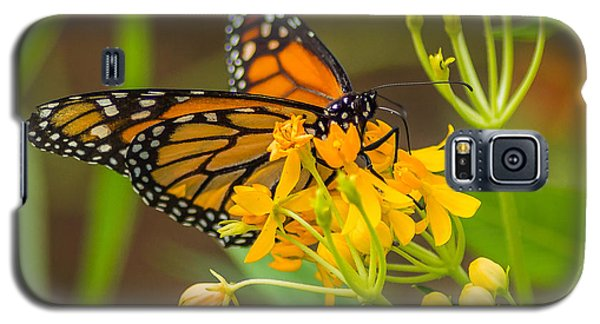 Galaxy S5 Case featuring the photograph Monarch by Jane Luxton