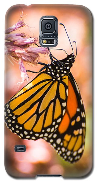 Galaxy S5 Case featuring the photograph Monarch by Janis Knight