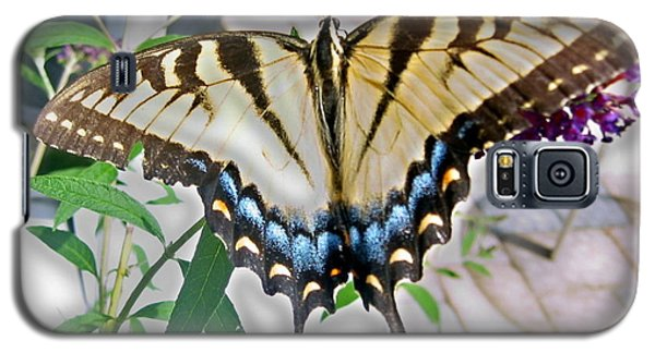 Galaxy S5 Case featuring the photograph Monarch Majesty by Judith Morris