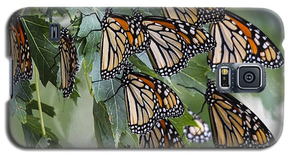 Monarch Migration Galaxy S5 Case