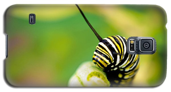 Galaxy S5 Case featuring the photograph Monarch Offspring Squared by TK Goforth