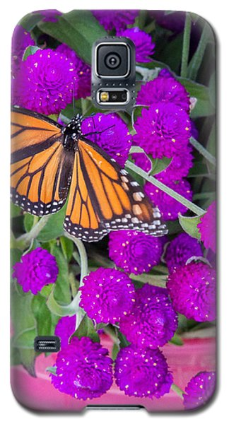 Monarch On Bachelor Buttons Galaxy S5 Case