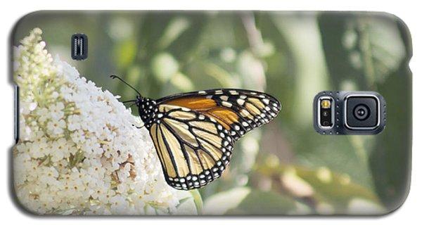 Monarch On Buddleia Galaxy S5 Case