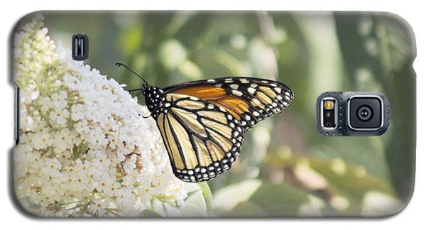 Monarch On Buddleia Galaxy S5 Case