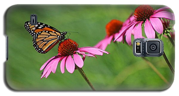 Monarch On Garden Coneflowers Galaxy S5 Case