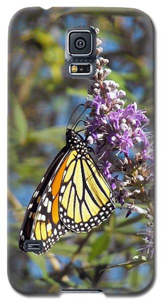Monarch On Vitex Galaxy S5 Case by Jayne Wilson