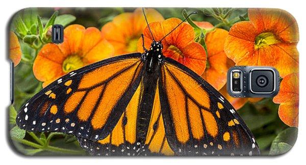 Monarch Resting Galaxy S5 Case