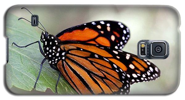 Monarch Resting On A Leaf Galaxy S5 Case by Ruth Jolly