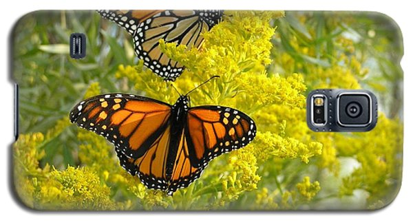 Monarchs On Goldenrod Galaxy S5 Case by Susan  Dimitrakopoulos